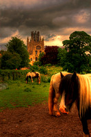 Ponies By The Cathedral
